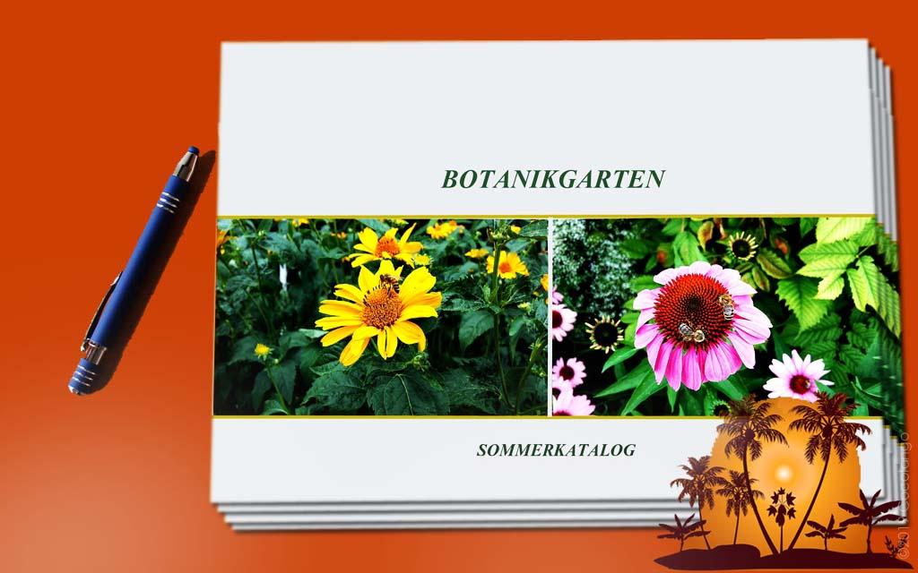 katalog l broschüre l flyer l cocolango